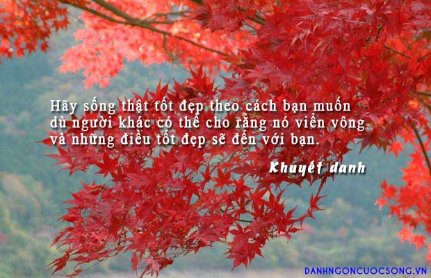 hanhphuc7