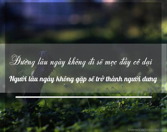 273 - Đường lâu ngày không đi sẽ mọc đầy cỏ dại. Người lâu ngày không gặp sẽ trở thành người dưng