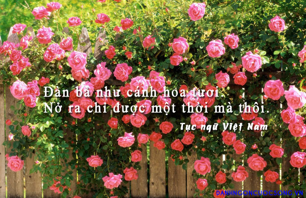danhngonphunu76 - Đàn bà như cánh hoa tươi. Nở ra chỉ được một thời mà thôi
