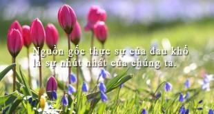 hanhphuc1 310x165 - Nguồn gốc thực sự của đau khổ là sự nhút nhát của chúng ta