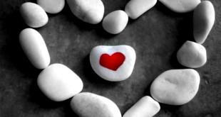 trai tim bo oc 310x165 - Trái tim, bộ óc và cái lưỡi