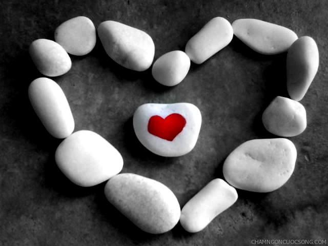 trai tim bo oc - Trái tim, bộ óc và cái lưỡi