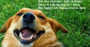 nhung cau tho che hay 2 310x165 - Những câu thơ chế hay và hài hước nhất