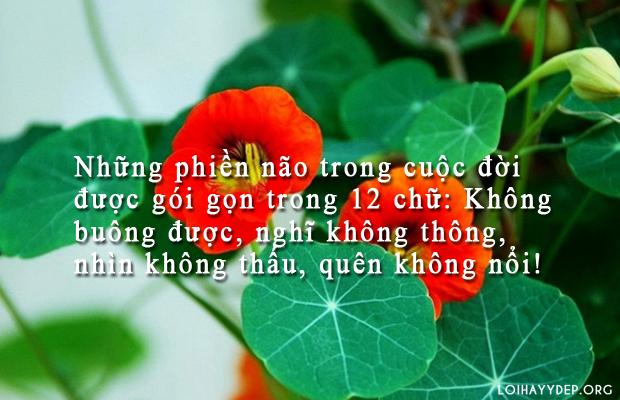 nhung phien nao trong cuoc doi duoc goi gon trong 12 chu khong buong duoc nghi kh - Những phiền não trong cuộc đời được gói gọn trong 12 chữ: Không buông được, nghĩ không thông, nhìn không thấu, quên không nổi!